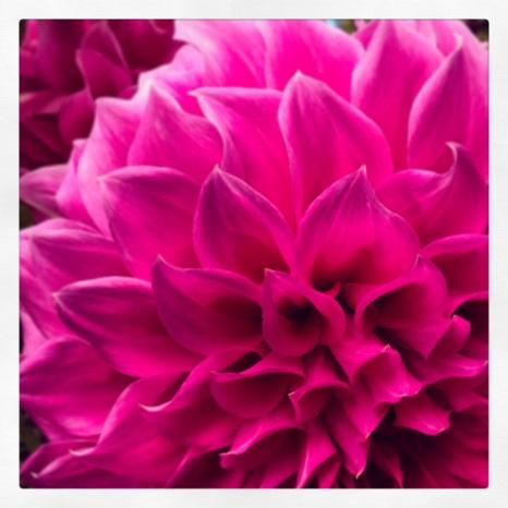 A Bouquet Of Lips