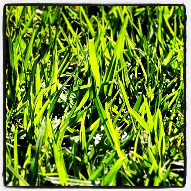 In Every Blade Of Grass A Universe
