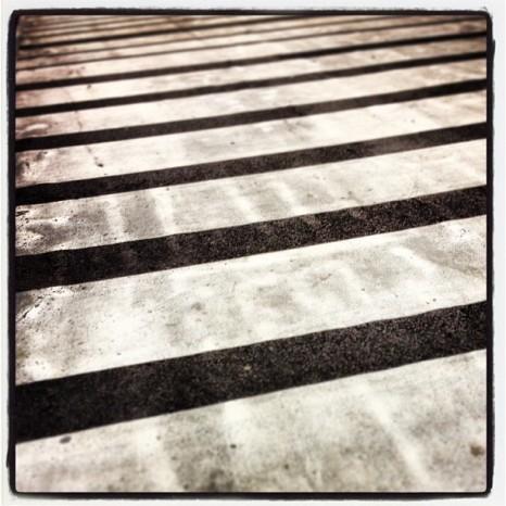 Zebra Field (Dirty Version)