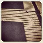Zebra Shadow