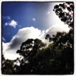 Cloud of Trees