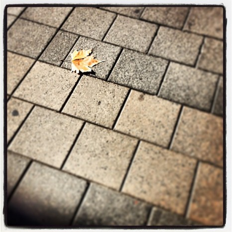 Leaf Alone 2