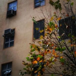 Windows into Winter