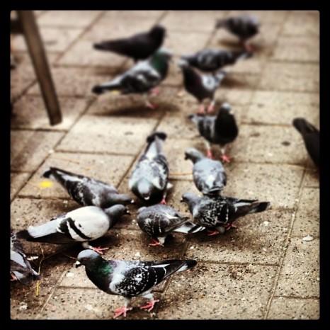 Concrete Pigeons